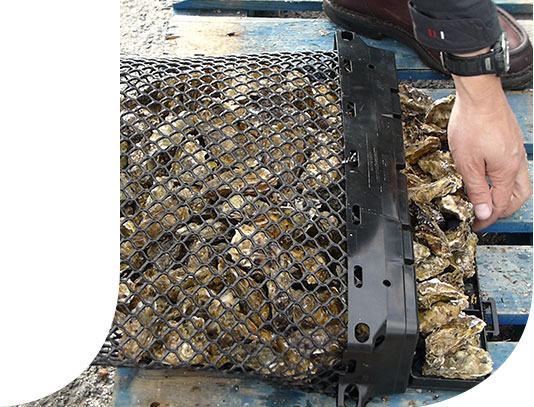 Zoom on an open system of an oyster bag